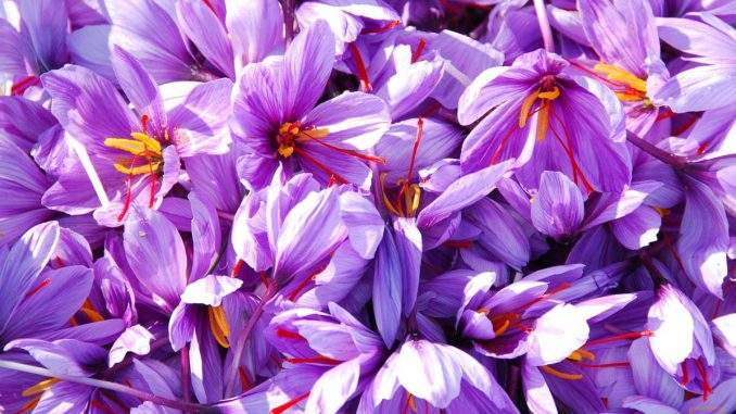 export of saffron in Iran returns to normal
